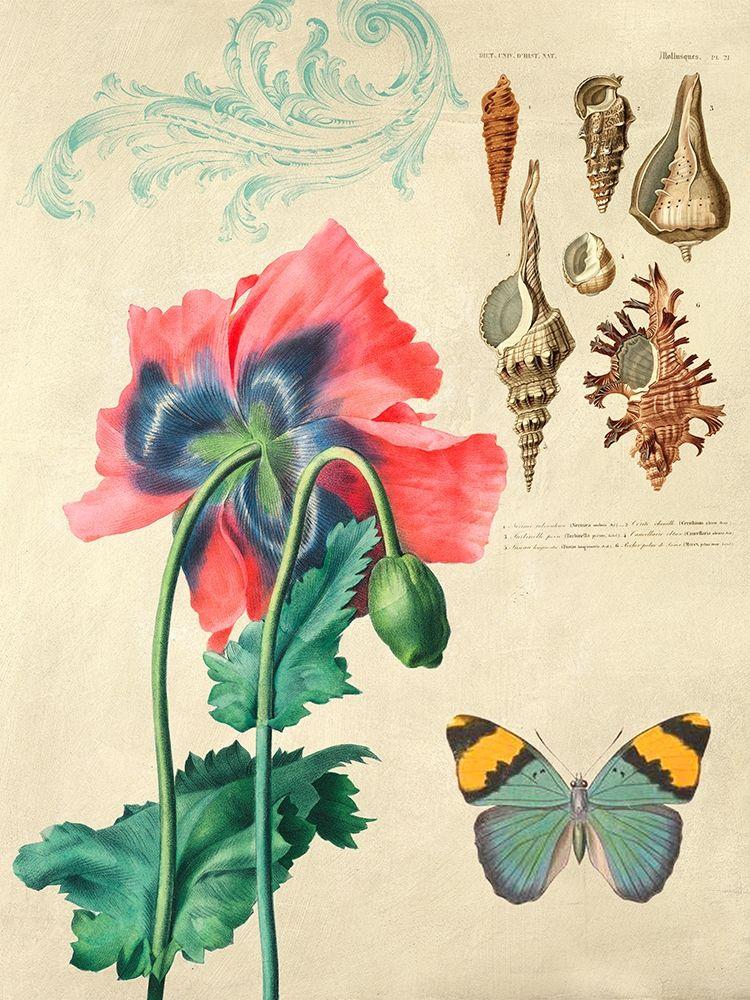konfigurieren des Kunstdrucks in Wunschgröße Cabinet of Curiosities n. 3 von Joannoo