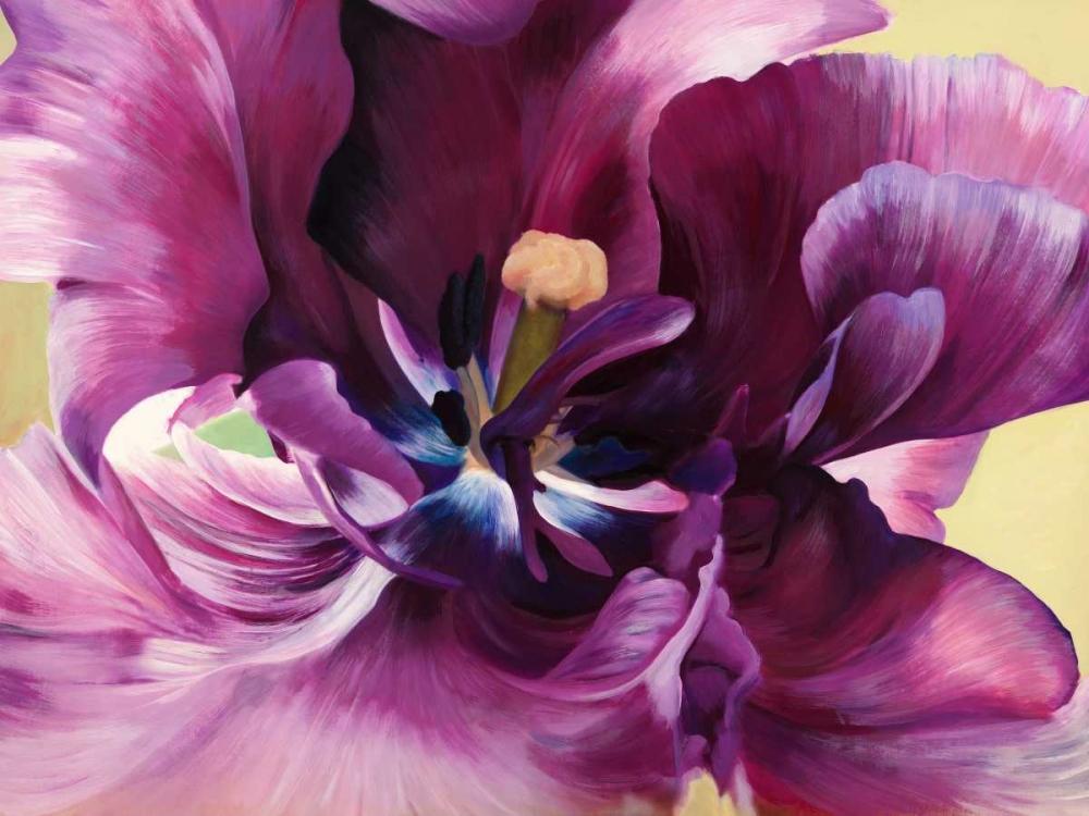 konfigurieren des Kunstdrucks in Wunschgröße Purple tulip close-up von Villa, Luca