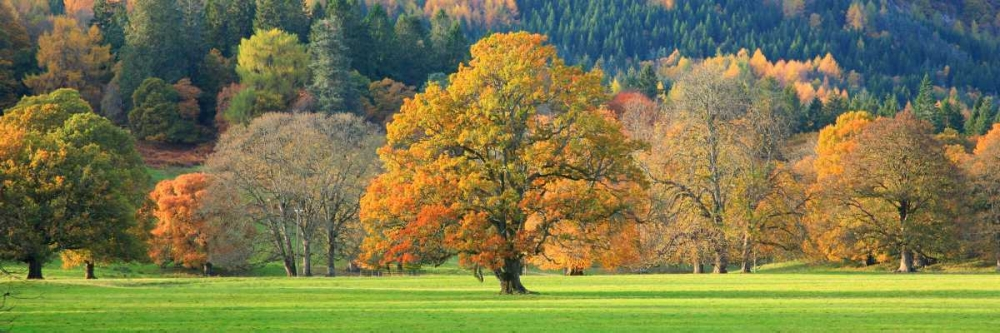 konfigurieren des Kunstdrucks in Wunschgröße Mixed trees in autumn colour Scotland von Anonymous