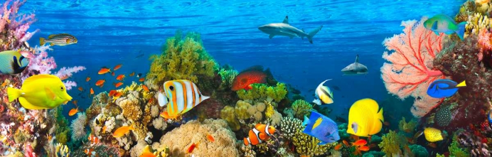Life in the Coral Reef- Maldives von Pangea Images <br> max. 269 x 84cm <br> Preis: ab 10€