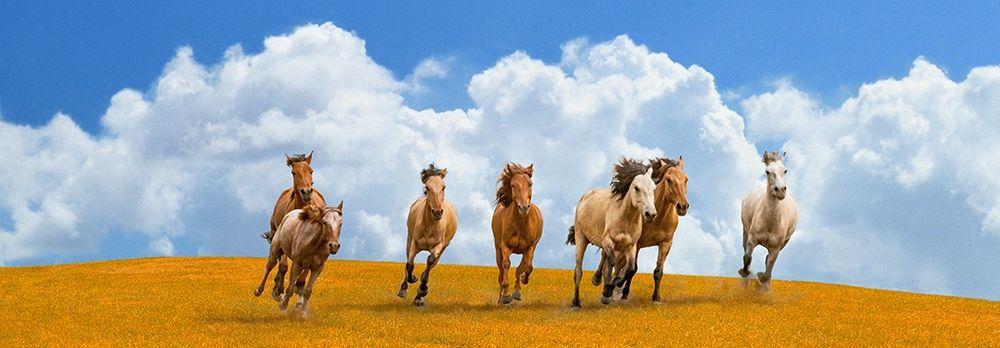 konfigurieren des Kunstdrucks in Wunschgröße Herd of wild horses (detail) von Pangea Images
