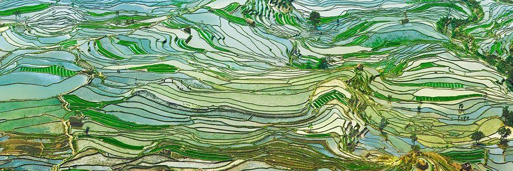 konfigurieren des Kunstdrucks in Wunschgröße Rice Terraces- Yunnan- China von Krahmer, Frank