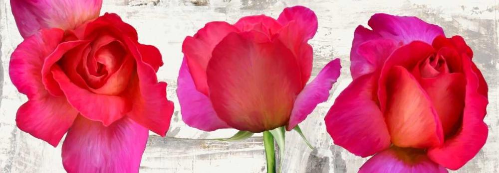konfigurieren des Kunstdrucks in Wunschgröße Spring Roses von Thomlinson, Jenny