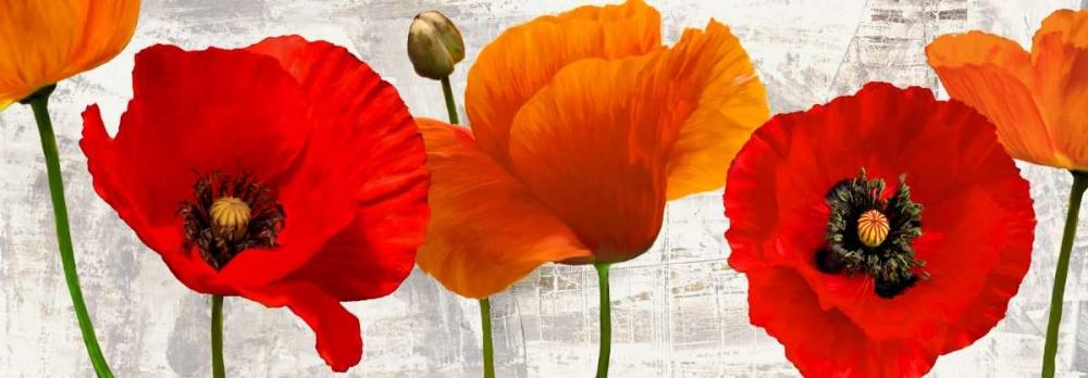 konfigurieren des Kunstdrucks in Wunschgröße Summer Poppies von Thomlinson, Jenny