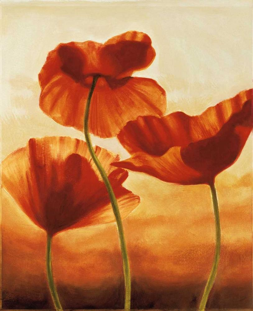 konfigurieren des Kunstdrucks in Wunschgröße Poppies in Sunlight II von Kahn, Andrea