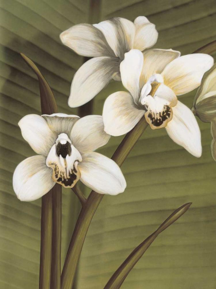 konfigurieren des Kunstdrucks in Wunschgröße Orchid with Palm I von Trivelli, Andrea