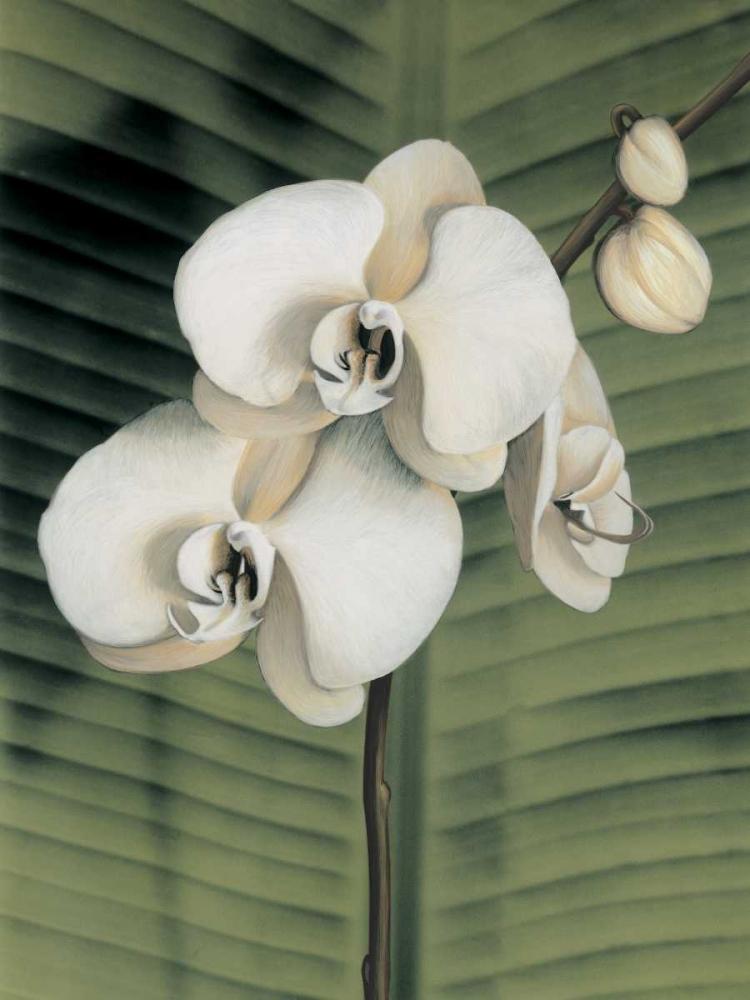 konfigurieren des Kunstdrucks in Wunschgröße Orchid with Palm II von Trivelli, Andrea