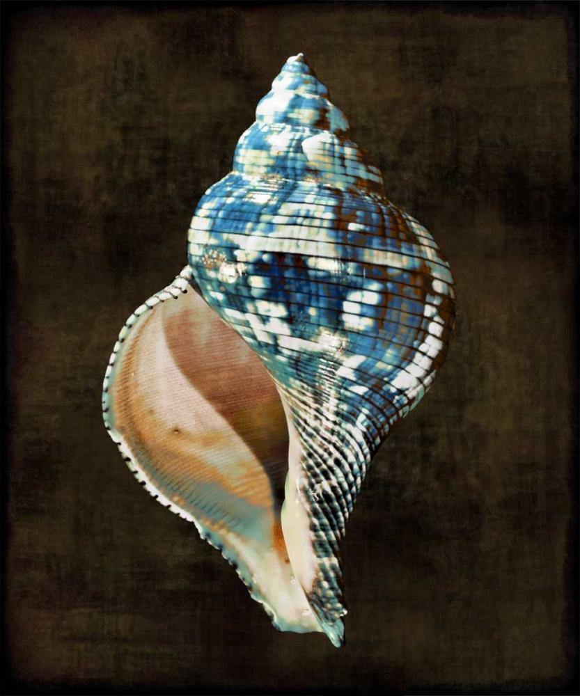 konfigurieren des Kunstdrucks in Wunschgröße Ocean Treasure III von Kelly, Caroline