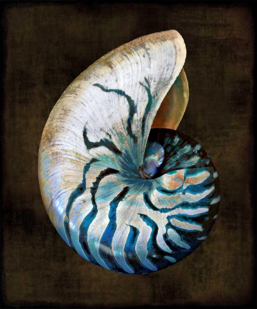 konfigurieren des Kunstdrucks in Wunschgröße Ocean Treasure IV von Kelly, Caroline