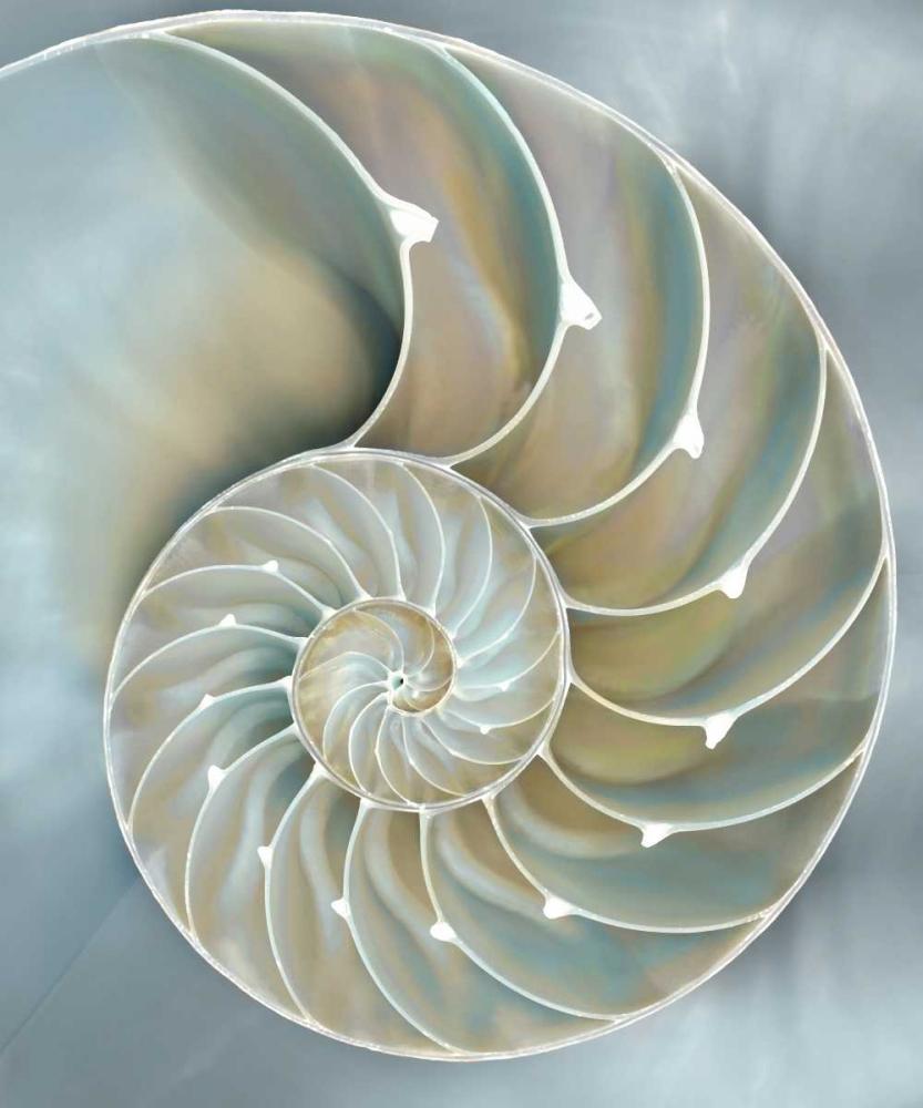 konfigurieren des Kunstdrucks in Wunschgröße Nautilus in Blue II von Kelly, Caroline
