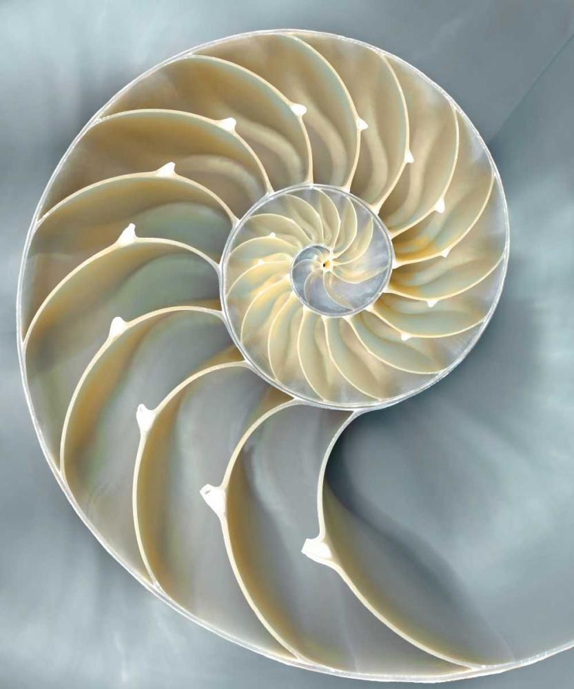 konfigurieren des Kunstdrucks in Wunschgröße Nautilus in Blue I von Kelly, Caroline