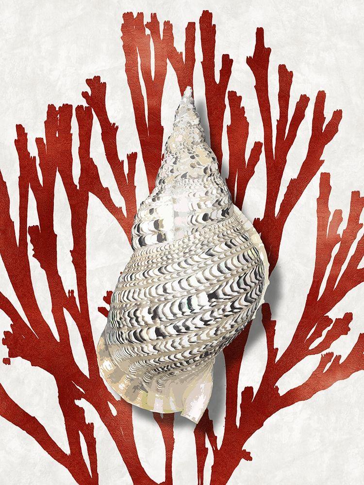 konfigurieren des Kunstdrucks in Wunschgröße Shell Coral Red I von Kelly, Caroline