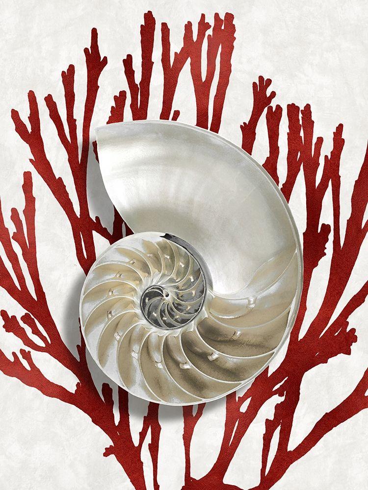 konfigurieren des Kunstdrucks in Wunschgröße Shell Coral Red II von Kelly, Caroline