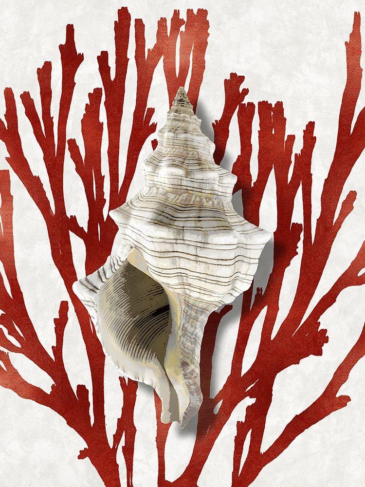 konfigurieren des Kunstdrucks in Wunschgröße Shell Coral Red III von Kelly, Caroline