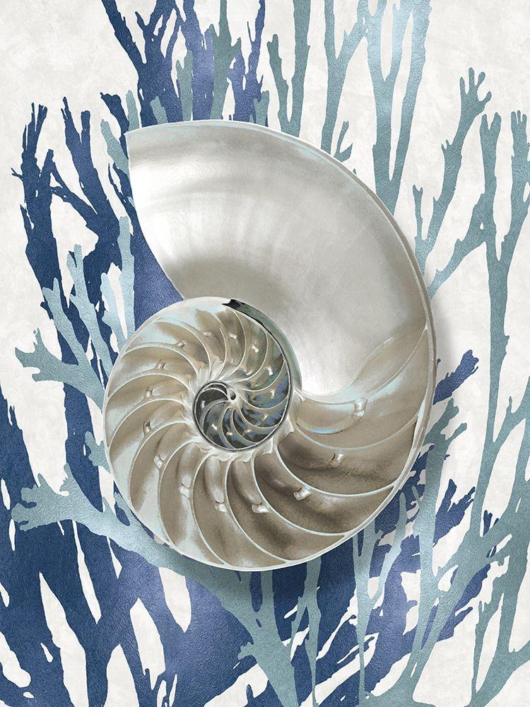 konfigurieren des Kunstdrucks in Wunschgröße Shell Coral Aqua Blue II von Kelly, Caroline