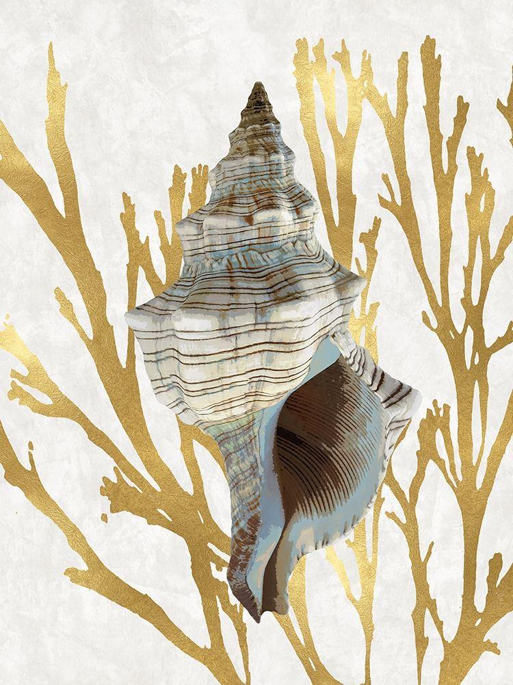 konfigurieren des Kunstdrucks in Wunschgröße Shell Coral Gold III von Kelly, Caroline