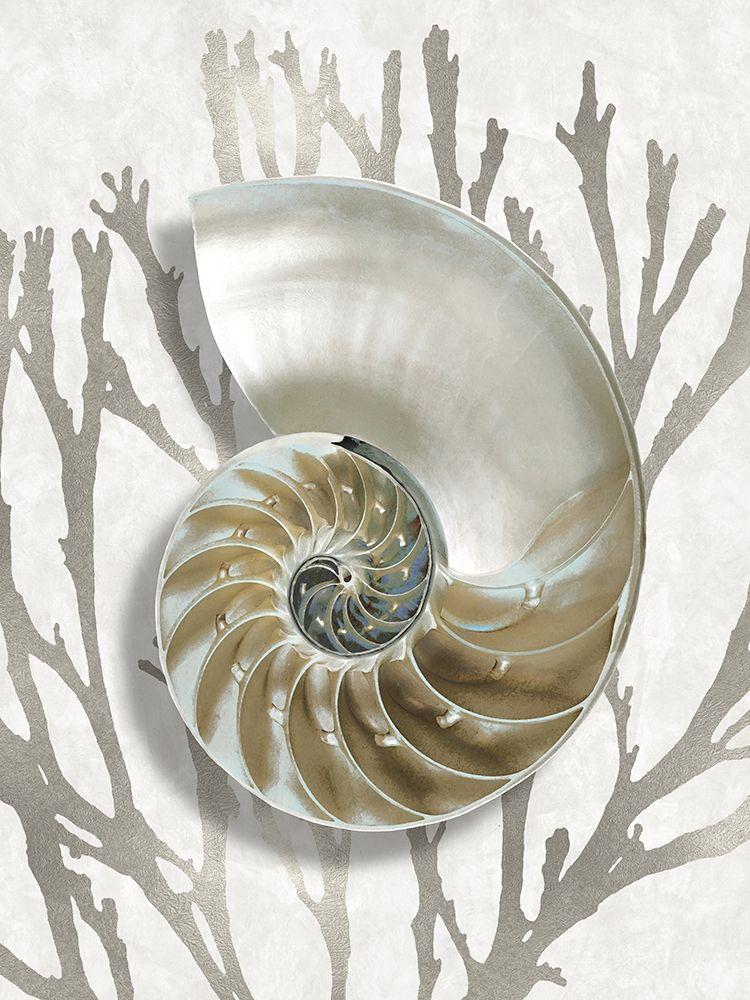 konfigurieren des Kunstdrucks in Wunschgröße Shell Coral Silver II von Kelly, Caroline