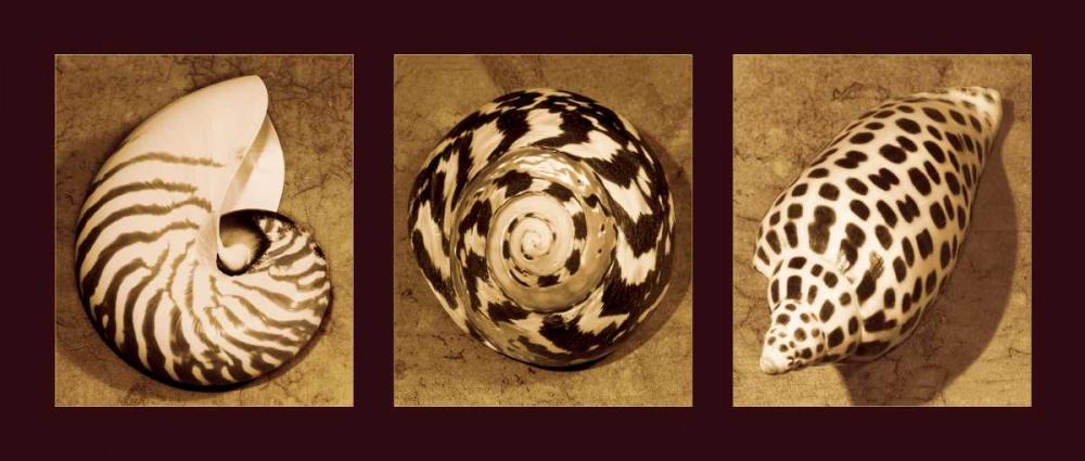 konfigurieren des Kunstdrucks in Wunschgröße Shell Trio von Kelly, Caroline
