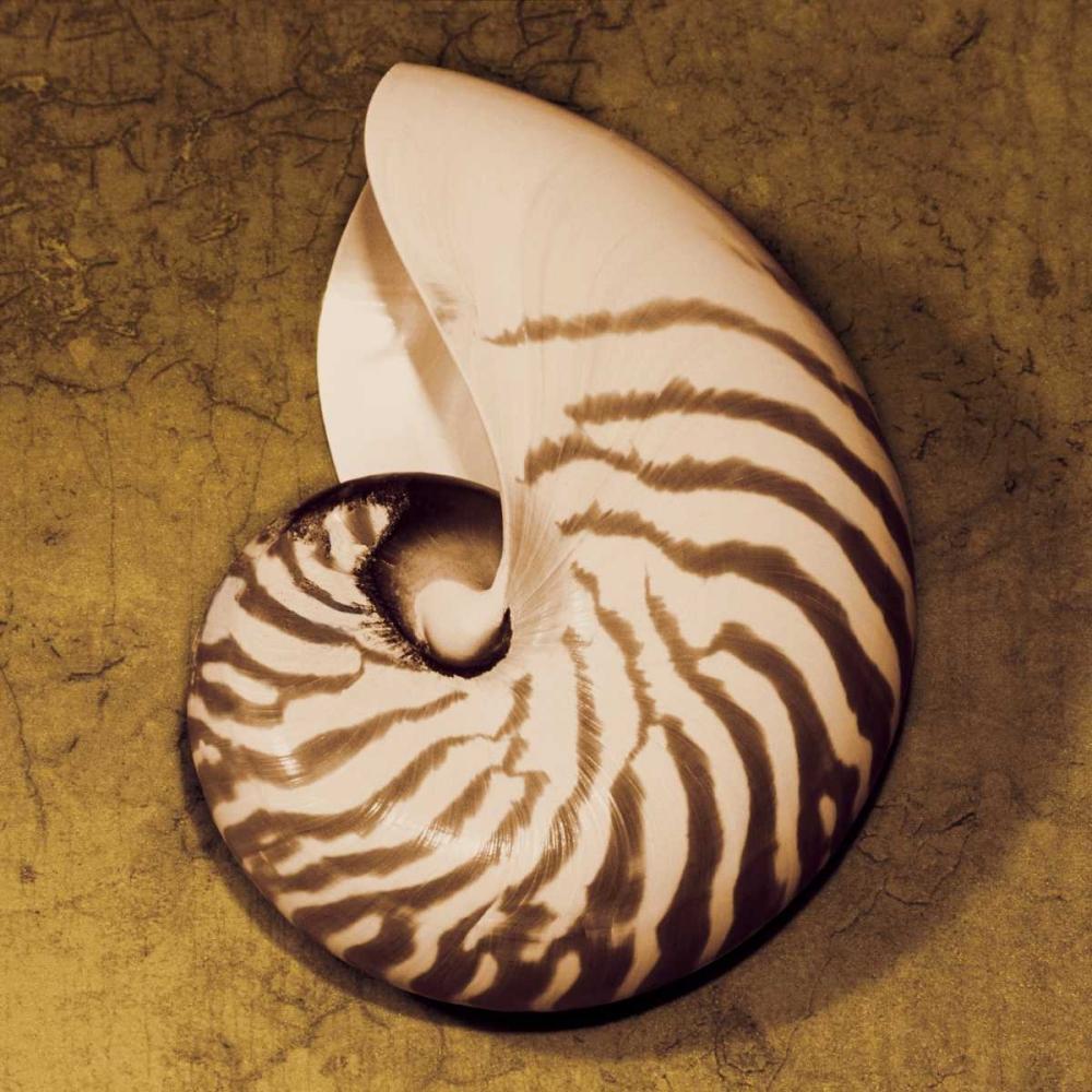 konfigurieren des Kunstdrucks in Wunschgröße Nautilus von Kelly, Caroline
