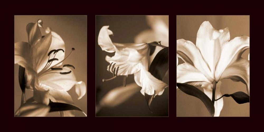 konfigurieren des Kunstdrucks in Wunschgröße Lily Trio von Kelly, Caroline
