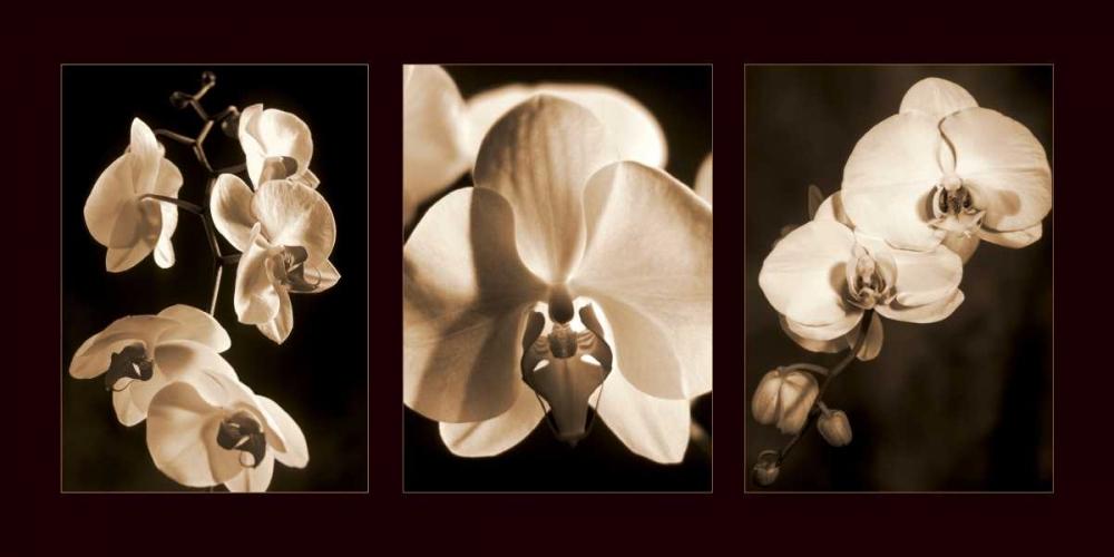 konfigurieren des Kunstdrucks in Wunschgröße Orchid Trio von Kelly, Caroline