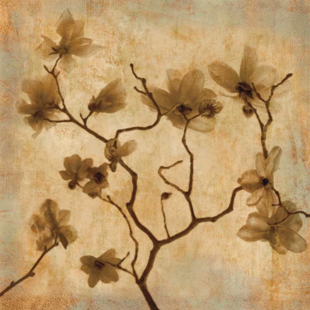 konfigurieren des Kunstdrucks in Wunschgröße Magnolias I von Kelly, Caroline