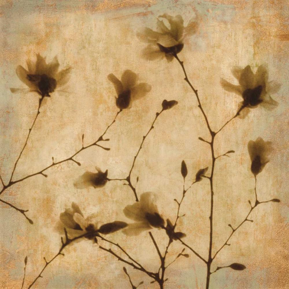 konfigurieren des Kunstdrucks in Wunschgröße Magnolias II von Kelly, Caroline