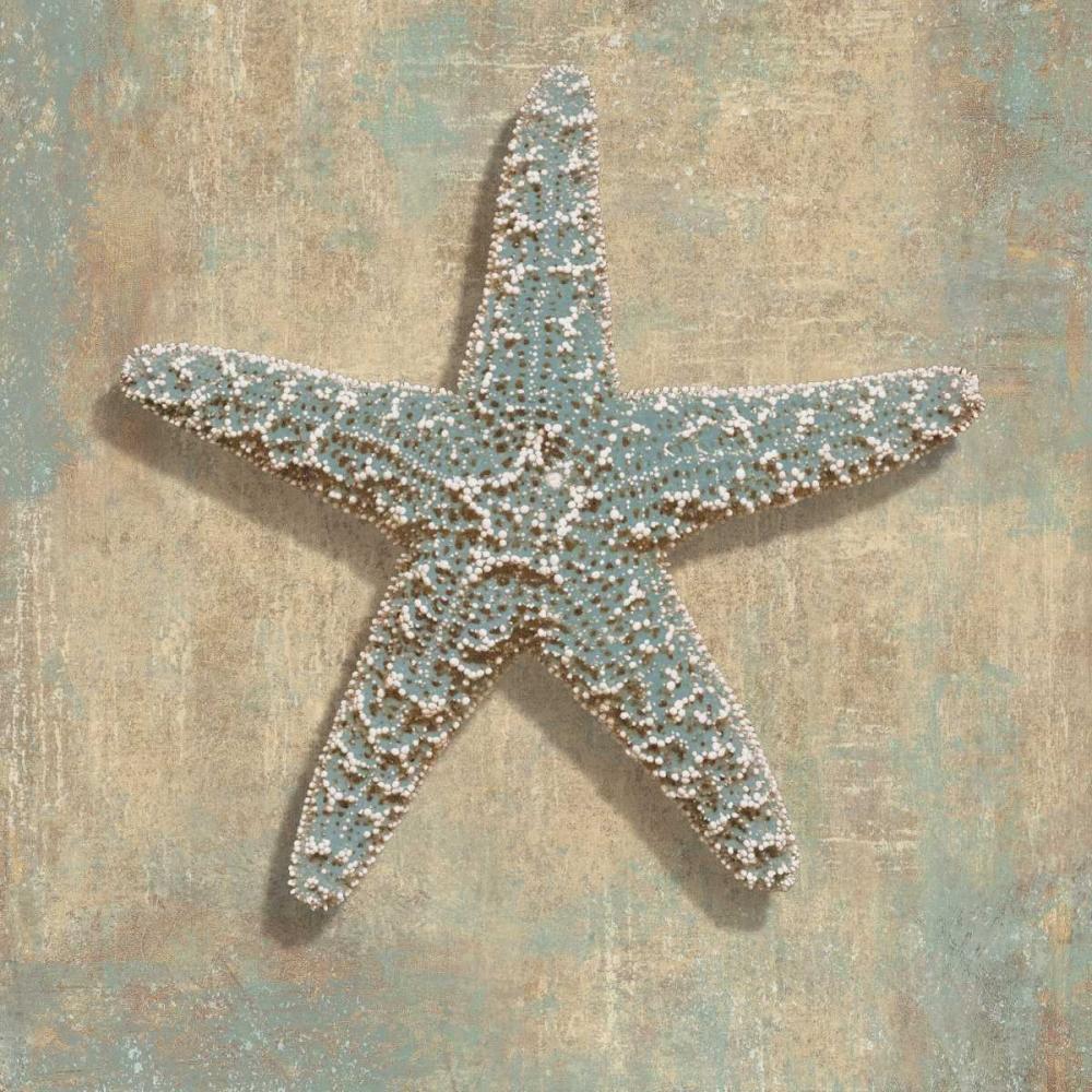 konfigurieren des Kunstdrucks in Wunschgröße Aqua Starfish von Kelly, Caroline