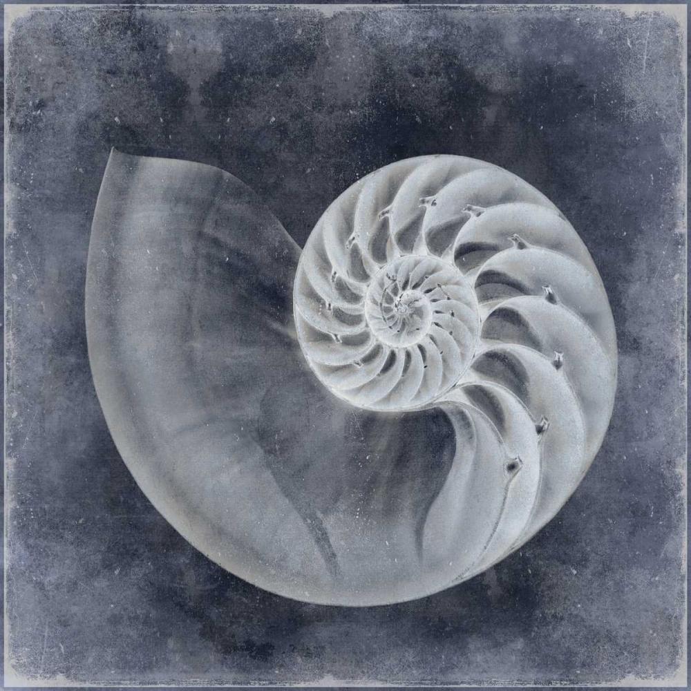 konfigurieren des Kunstdrucks in Wunschgröße Ocean Blue IV von Kelly, Caroline