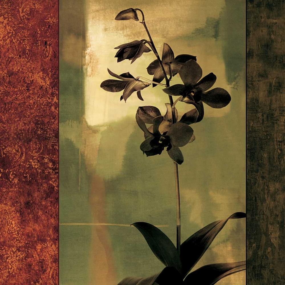 konfigurieren des Kunstdrucks in Wunschgröße Mesmerized II von Donovan, Chris