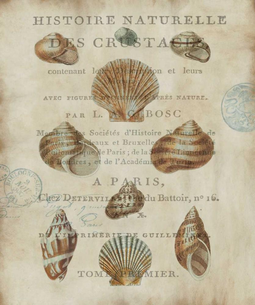 konfigurieren des Kunstdrucks in Wunschgröße Shell Collection II von Devellier, Deborah