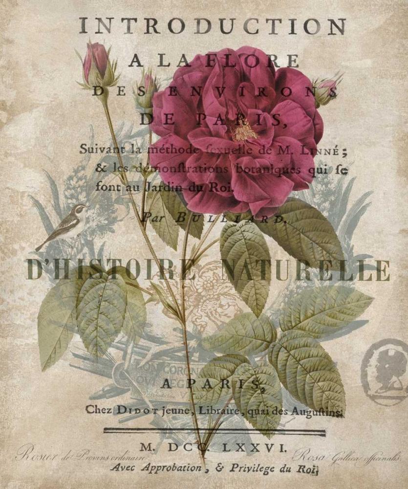 konfigurieren des Kunstdrucks in Wunschgröße Botanique I von Devellier, Deborah
