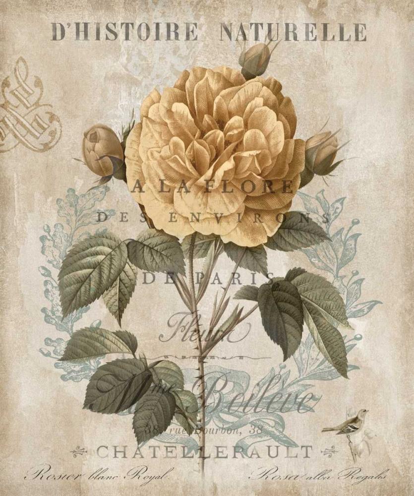konfigurieren des Kunstdrucks in Wunschgröße Botanique II von Devellier, Deborah