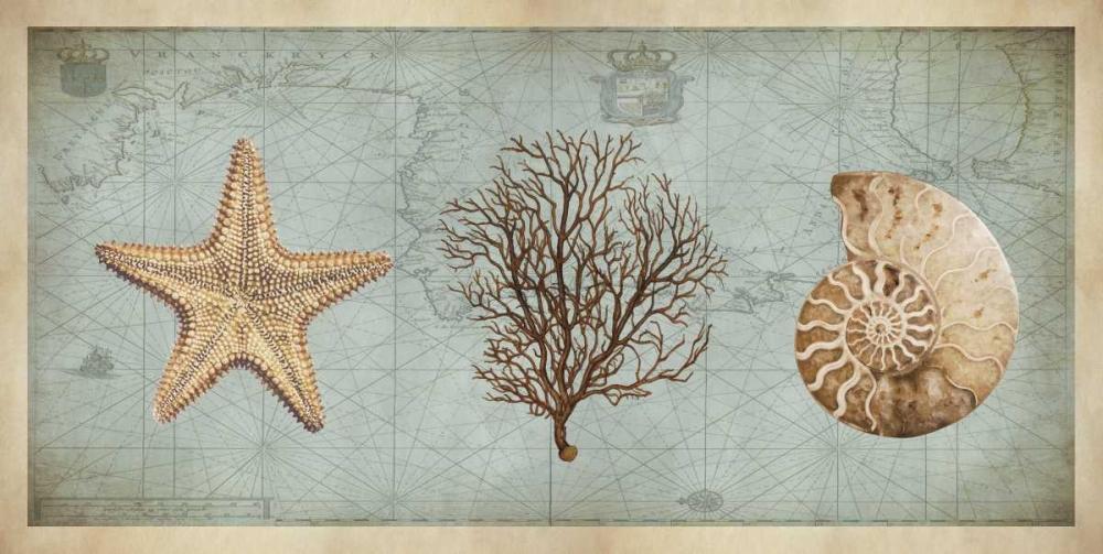 konfigurieren des Kunstdrucks in Wunschgröße Sea Treasures II von Devellier, Deborah