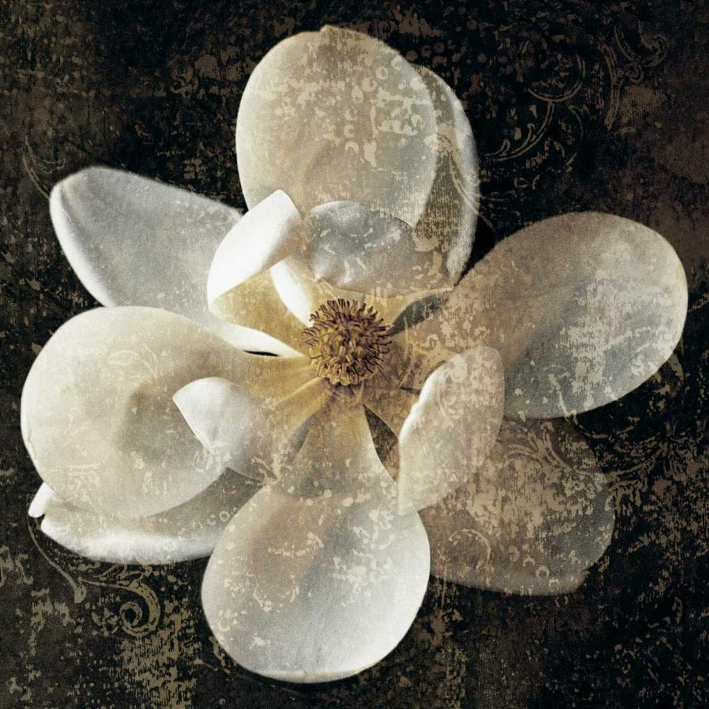konfigurieren des Kunstdrucks in Wunschgröße Magnolia I von Seba, John