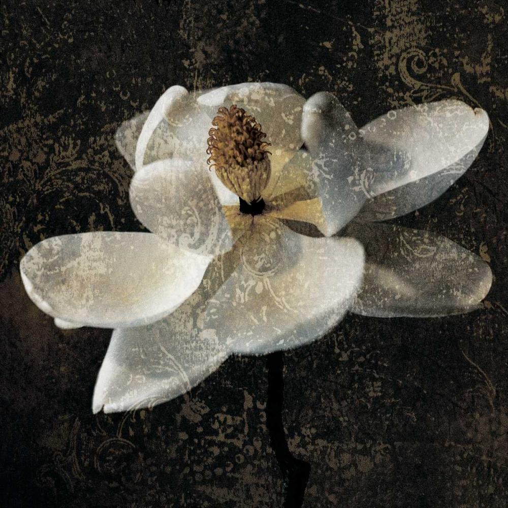 konfigurieren des Kunstdrucks in Wunschgröße Magnolia II von Seba, John