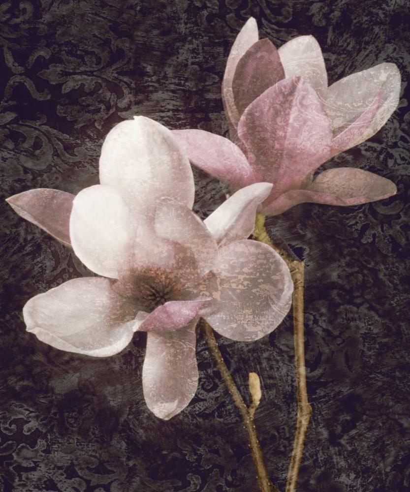 konfigurieren des Kunstdrucks in Wunschgröße Pink Magnolias I von Seba, John
