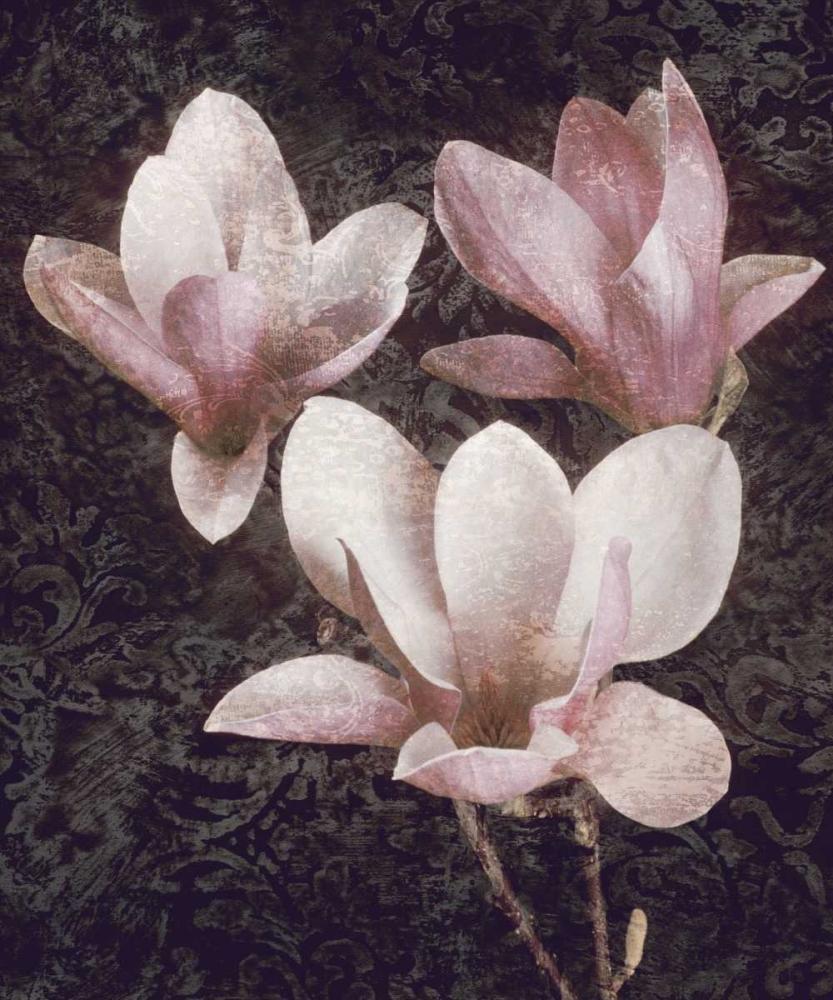 konfigurieren des Kunstdrucks in Wunschgröße Pink Magnolias II von Seba, John