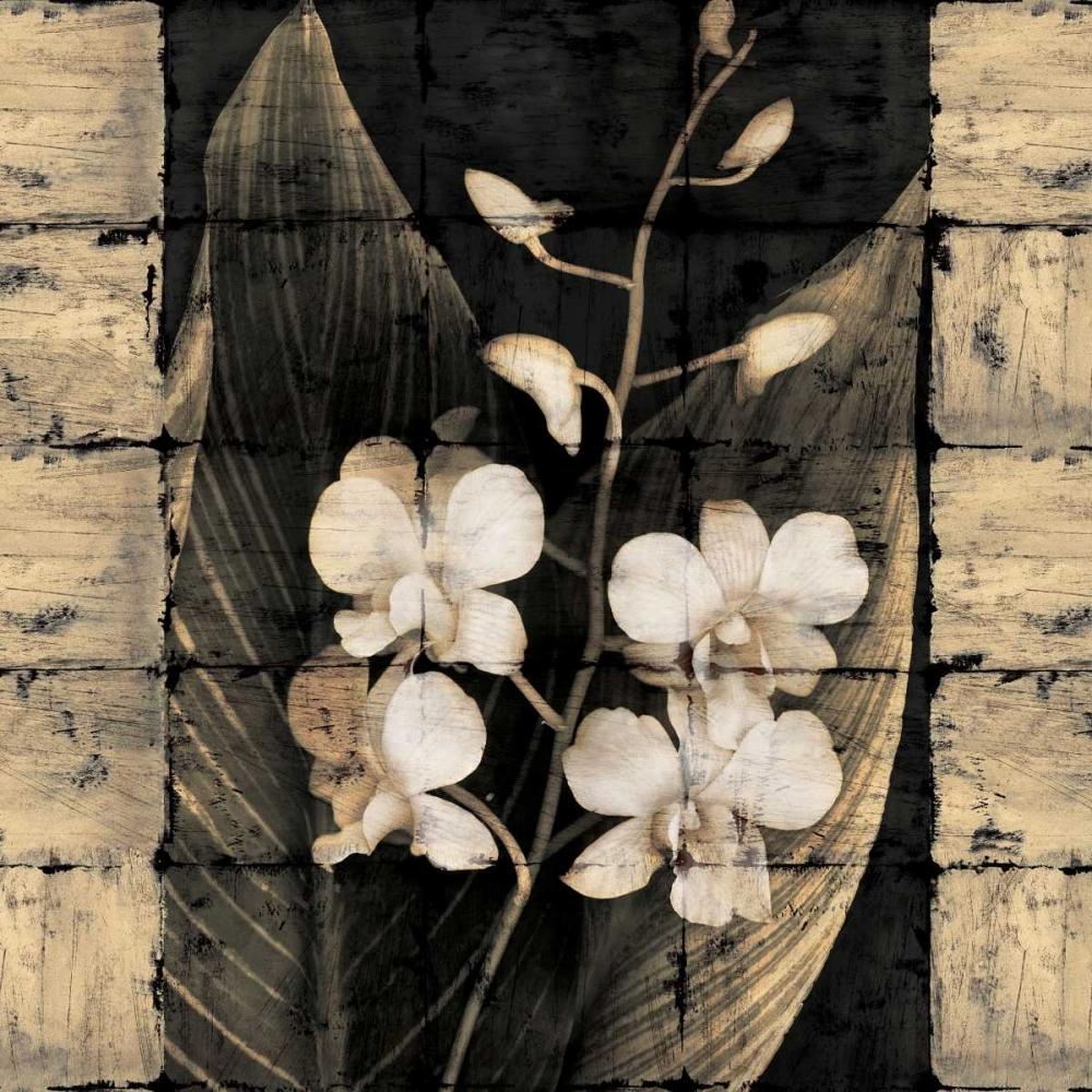 konfigurieren des Kunstdrucks in Wunschgröße Orchids in Bloom I von Seba, John