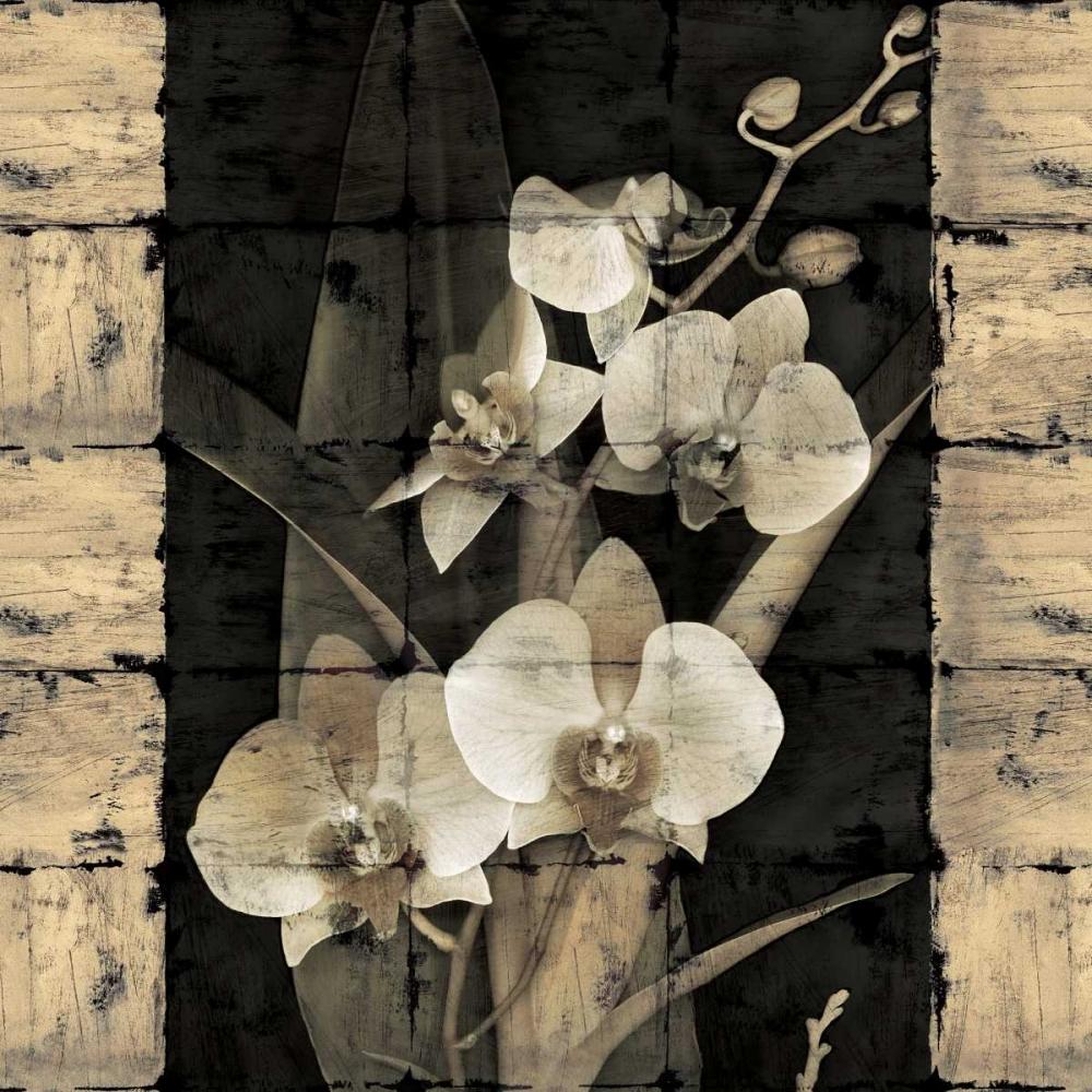 konfigurieren des Kunstdrucks in Wunschgröße Orchids in Bloom II von Seba, John