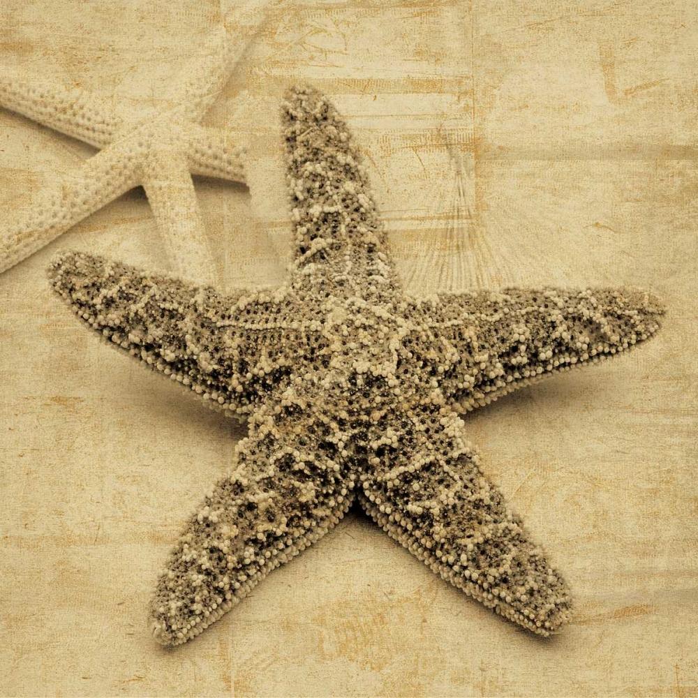 konfigurieren des Kunstdrucks in Wunschgröße Starfish von Seba, John