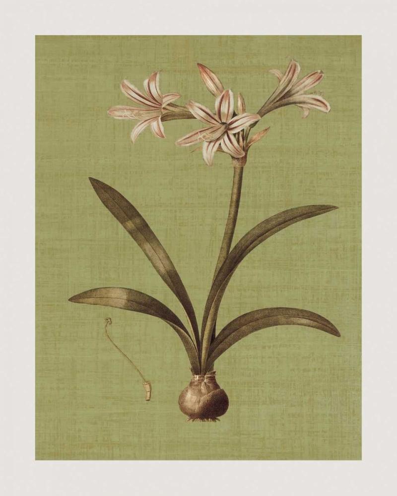 konfigurieren des Kunstdrucks in Wunschgröße Botanica Verde I von Seba, John