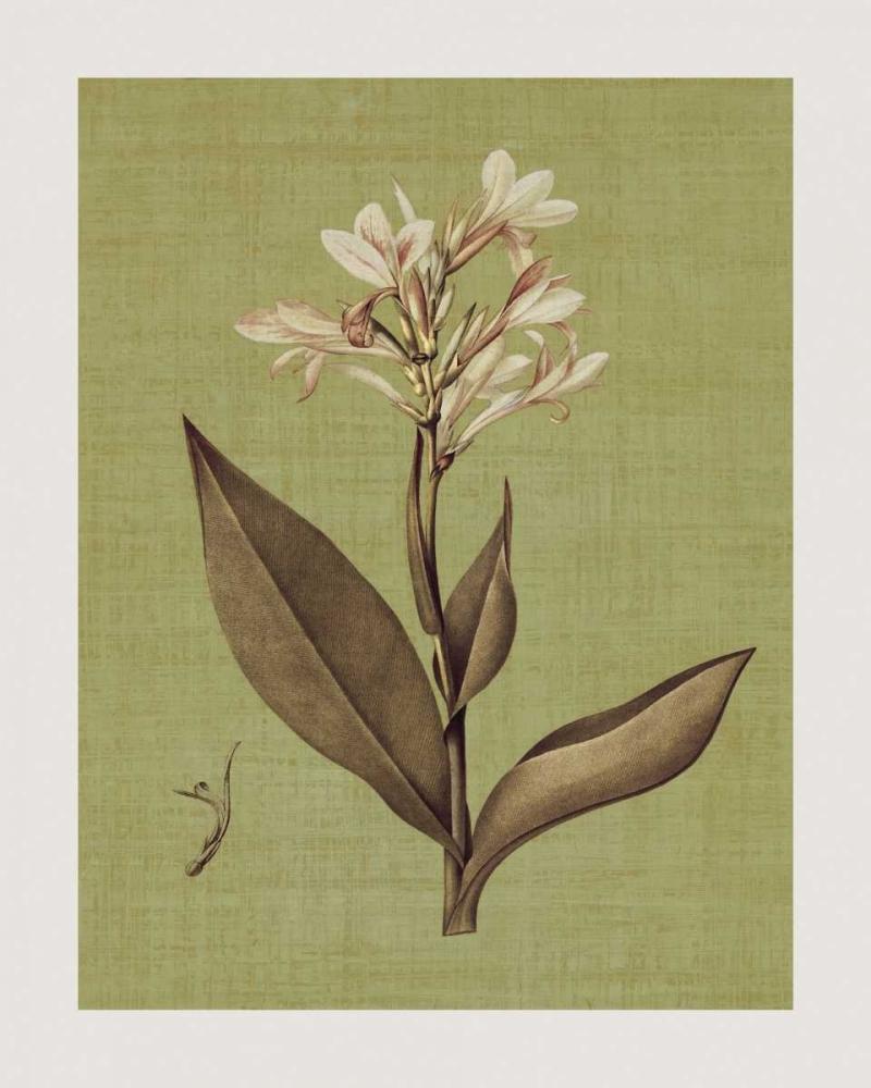 konfigurieren des Kunstdrucks in Wunschgröße Botanica Verde II von Seba, John