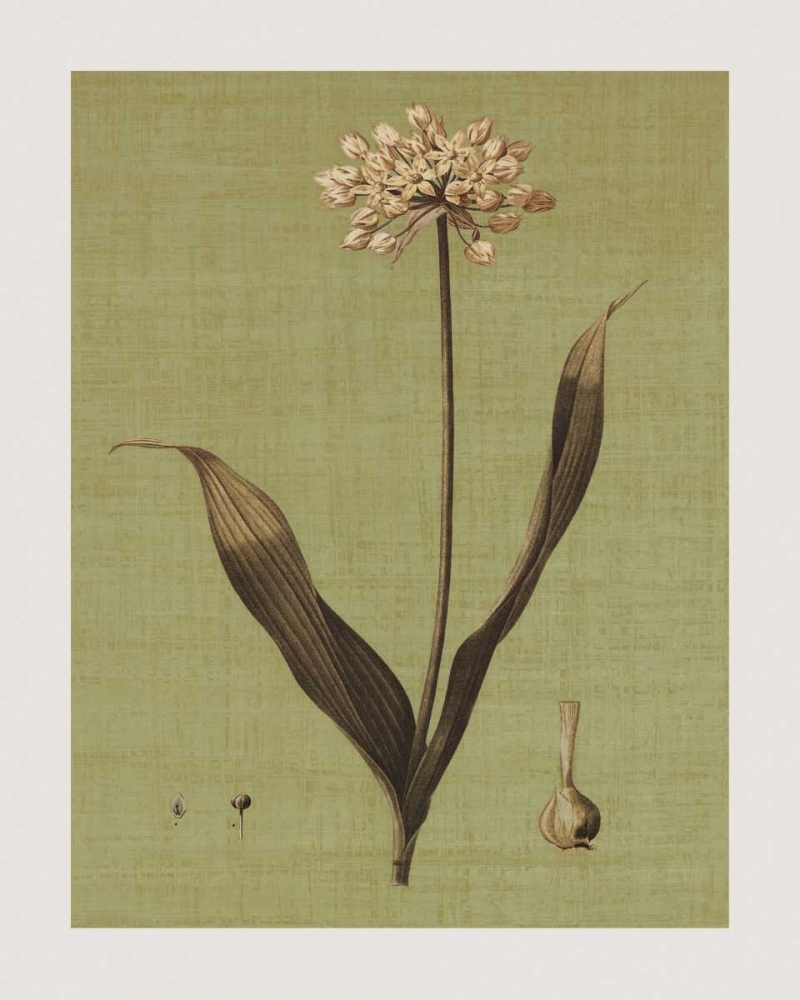 konfigurieren des Kunstdrucks in Wunschgröße Botanica Verde III von Seba, John