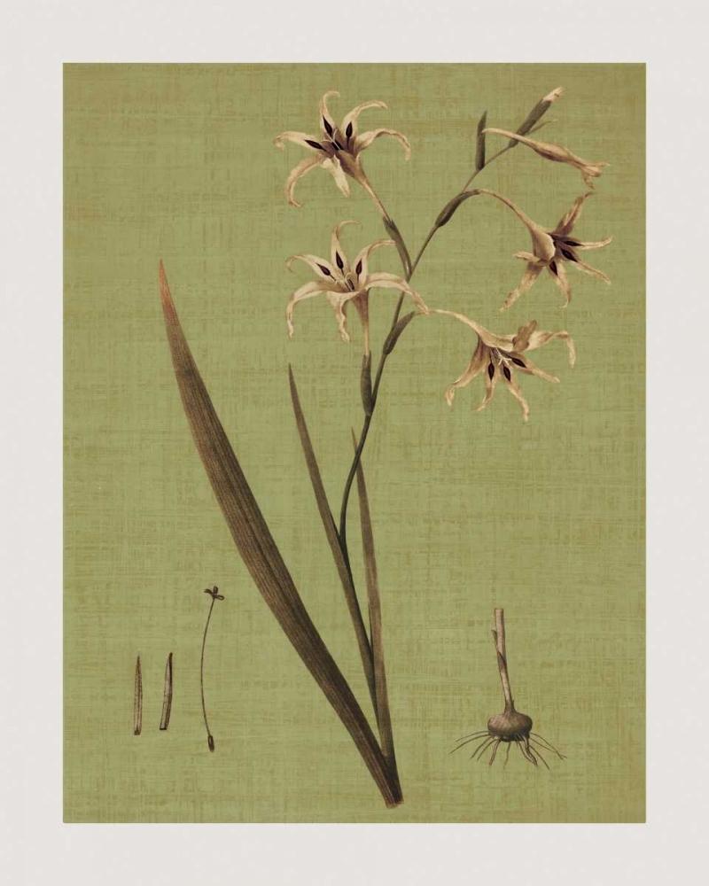 konfigurieren des Kunstdrucks in Wunschgröße Botanica Verde IV von Seba, John