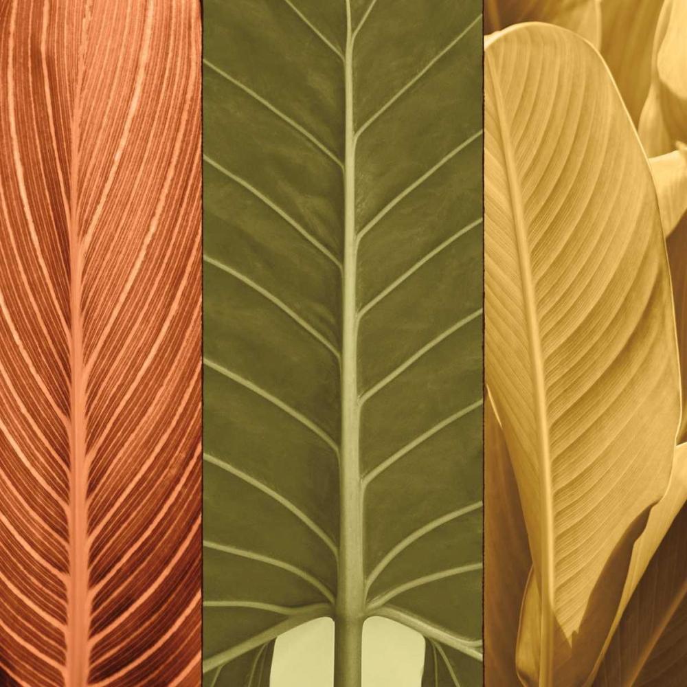 konfigurieren des Kunstdrucks in Wunschgröße Tropical Trio I von Seba, John