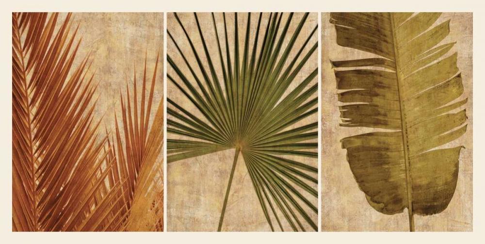 konfigurieren des Kunstdrucks in Wunschgröße Palm Vista II von Seba, John