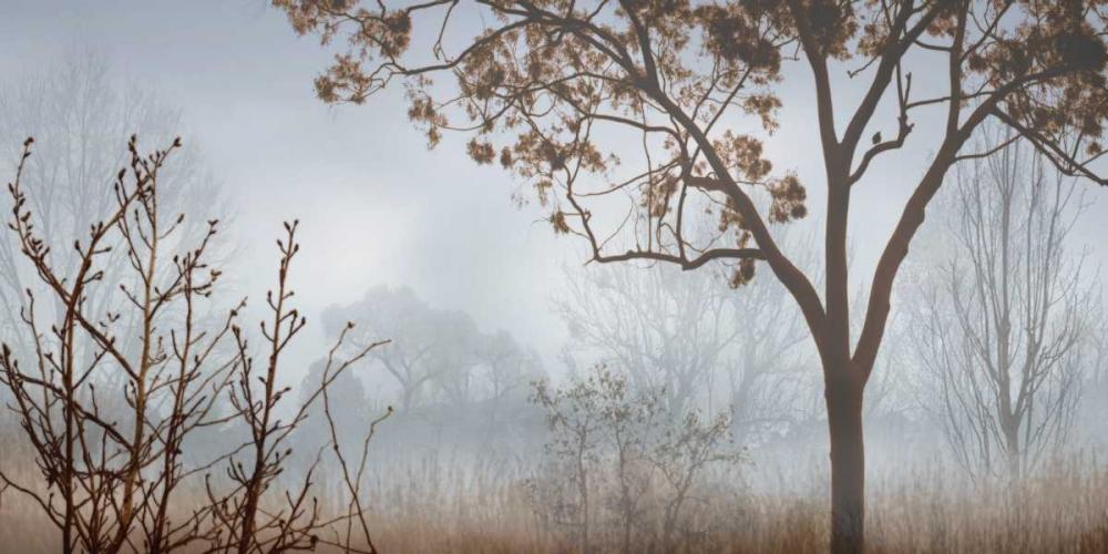 konfigurieren des Kunstdrucks in Wunschgröße Early Morning Mist I von Seba, John