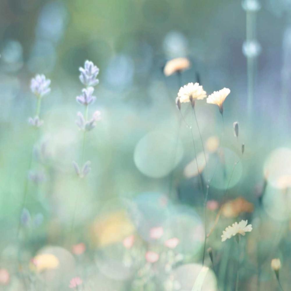 konfigurieren des Kunstdrucks in Wunschgröße Morning Meadow I von Carrigan, Kate