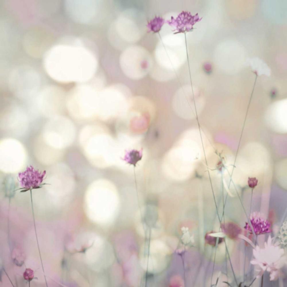 konfigurieren des Kunstdrucks in Wunschgröße Floral Meadow I von Carrigan, Kate
